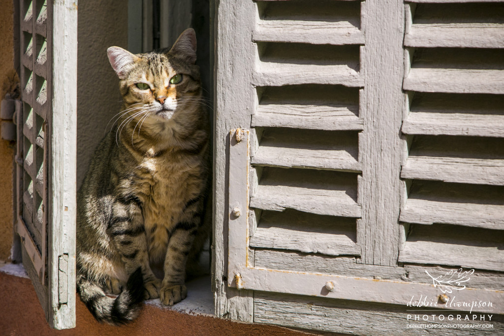 A French cat enjoying the early morning sunshine